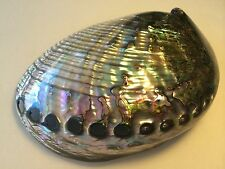 "Green Abalone Sea Shell Both Side Polished Beach Craft 7"" - 8"" ( 1 Pc)"