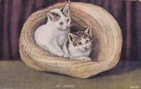 "Vintage ""AT HOME"" KITTENS IN A HAT Postcard #6201 1912 Unposted"