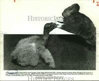 1982 Press Photo Condor chick fed by use of puppet at San Diego Wild Animal Park