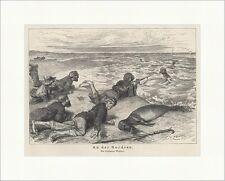 An der Nordsee. Seehunde Jäger Meer Ufer Wasser Harpune Jagd Waidmann 0501