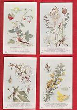 British museum, Natural history. British flowering plants, F.6. postcard