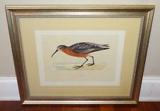 CURLEW SANDPIPER BIRD Antique Bird Print Vintage Framed Aquatint Hand Colored