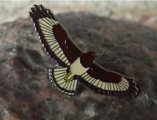 Soaring Buzzard Hawk Wildlife Protection Prey Bird Raptor Brooch Pin Badge