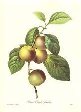 Vintage Kitchen Home Decor Botanical Print Redoute Plum Fruit Print pjr #2449