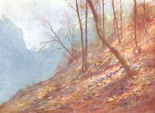 SWITZERLAND. Hepatica in the Woods at Bex 1917 old vintage print picture