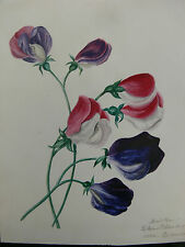 A Fine Group of 10 Mid-19th Century Botanical Watercolours and 3 Pencil Drawings