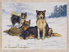 SIBERIAN HUSKY SLED DOG CANADIAN CONTINGENT LOVELY GREETINGS NOTE CARD