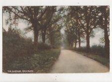 The Avenue Soulbury Buckinghamshire Vintage Postcard 509b