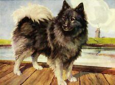 1930s Antique KEESHOND Dog Art Print Nina Scott Langley Dog Art 3262-P