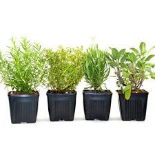 Herbs de Provence 4 Plants Herb Collection Grown Organic Non-GMO  | Herb Garden