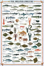 SHELLFISH AND MOLLUSKS 68 Species Wall Chart POSTER for Fishermen or Chefs