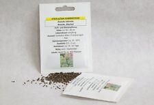 Resede Machet Reseda Samen Saatgut Saat Profiqualität Bienenpflanze Duftpflanze
