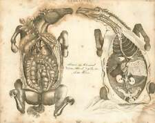 1802  Farriery Thoracic And Abdominal Viscera Of The Horse Copperplate