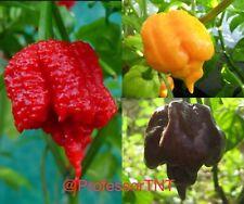 Scorpion Pepper COMBO PACK 100 Seeds Carolina Reaper Scorpion Chocolate & Yellow