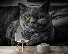 3D British Shorthair A576 Animal Wallpaper Mural Self-adhesive Removable Amy