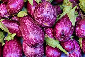 Aubergine 6 Pinstripe F1 Seeds - UK Seller