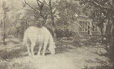 A1122 Vecchio Cavallo Bianco - Giorgio Buysse - Stampa Antica del 1905