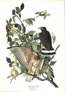J.J. Audubon Bird Prints - Part of the Folio - 8 prints, 14 x 17 INCHES