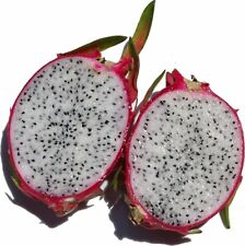 WHITE PITAYA PITAHAYA, Sweet Dragon Fruit Tree Fresh 50 Seeds