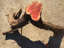 Red Cedar/ Juniper Natural Edge Furniture Blanks, Table Base / Leg Log 17C   J&R