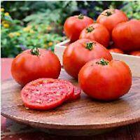 Better Boy Tomato Seeds