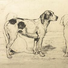 Art Deco etching Dog hound terrier portrait Christine McGregor antique #28