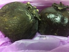 Diospyros Digyna BLACK SAPOTE Persimmon Chocolate Pudding Fruit * 5 Seeds * Rare