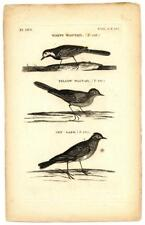 1776 T. Pennant White Yellow Wagtail Skylark Copper Engraving Antique Bird Print