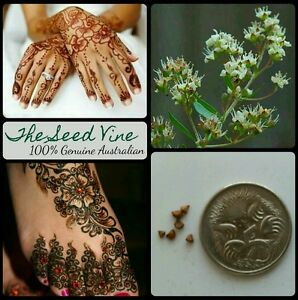 50+ HENNA PLANT SEEDS (Lawsonia inermis) Temporary Tattoo Ink Indian Bride