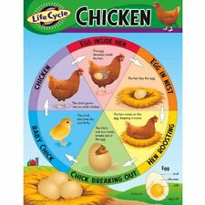 Life Cycle of a Chicken Learning Chart Trend Enterprises Inc. T-38153