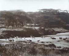 PhotoArthur Radclyffe Dugmore Afrique Kenya Vers 1910