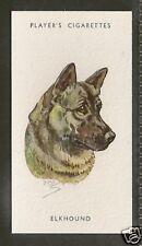 1940 UK Peter Biegel Dog Art Head Study Player Cigarette Card NORWEGIAN ELKHOUND