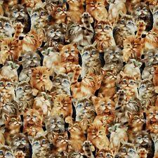 Animal Fabric - Packed Cats Kittens Black C4121 - Timeless Treasures YARD