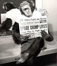 Vintage Space Chimp Lives Photo Bizarre Odd Freaky Strange