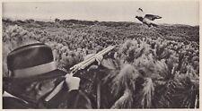 D5473 Cacciatore mira ad un colombaccio - Stampa d'epoca - 1938 vintage print