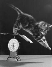 Chat et Pèse lettre © SPILLMAN & RAMSAY 1960