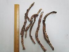 "NATIVE AMERICAN ""RAT ROOT"" (CALAMUS ROOT) - 5 PIECES - EACH APPROX 6"" - 12"" LONG"