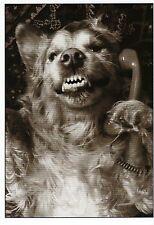Postkarte: Chatterbox: Hund am Telefon - dog talks on the phone