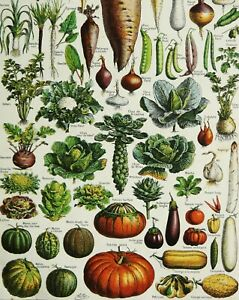 1900 Antique lithograph of VEGETABLES, HORTICULTURE, GARDENING. 121 years old.