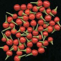 Hot Pepper Tepin Chiltepin Seeds