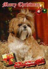 Shih Tzu Dog A6 Christmas Card Design XSHIH-18 by paws2print