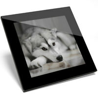 1 x Adorable Siberian Husky Pet Dog Glass Coaster - Kitchen Student Gift #8636