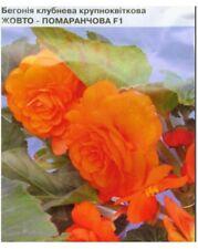 Begonia Seeds Large-tuber Yellow Orange F1 10 seeds Бегония S1121