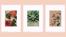 """IKEA Art Print TRILLING 3-Poster""""Rustic Flowers"""" Charming 7-¾x9-¾""""Floral Antique"""