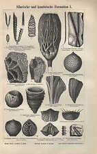 Lithografien 1896: Silurische und kambrische Formation I/II. Silur Kambrium
