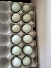 Americana 12 Fertile Chicken Eggs For Hatching Highly Desired
