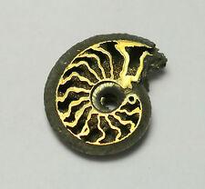 Rare Russian Volga River PYRITE Ammonite, Unique Cephalopod, energetic #3