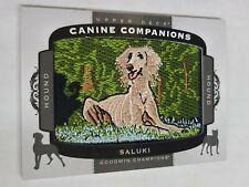 2018 Goodwin Champions Canine Companions Saluki #Cc157