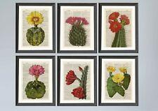 Set of 6 Cacti Dictionary Page A4 Art Prints Antique Book Page Art prints Cactus