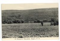 RPPC Widmer's Vineyards Winery NAPLES NY Finger Lakes Real Photo Postcard